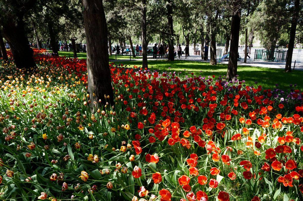Beijing Parks - Zhongshan Park