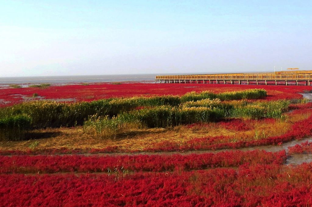Red Beach Panjin China